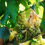 Que lenguaje hablan los vinos?