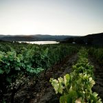 The lands of Ribeiro and its importance in wine